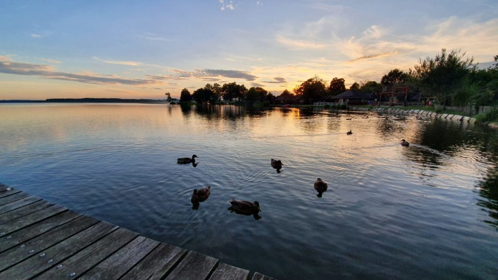 estanque con patos